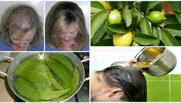 Easy Natural way to prevent Hair fall 1 Behind History
