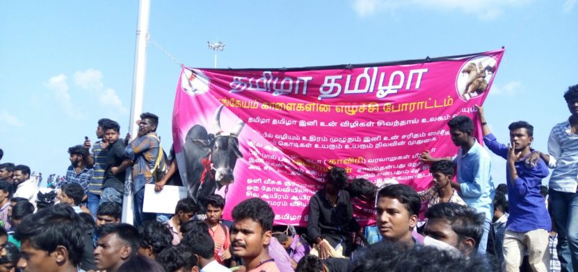 Jallikattu Protest   Students Refusing to Leave 1 Behind History