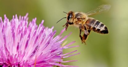 8 Super Facts about Honey Bees 4 Behind History